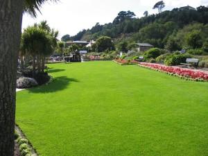zöld kert