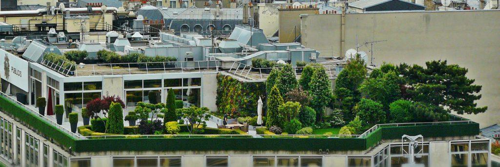tetőkert a városban