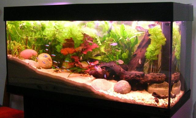akvárium otthonra