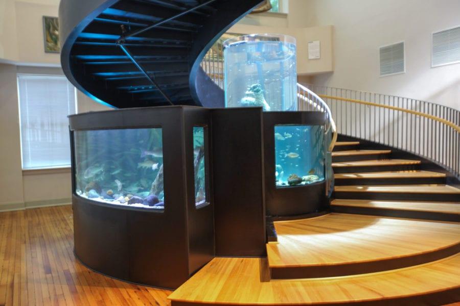 Akvárium otthon – tartsunk díszhalakat!