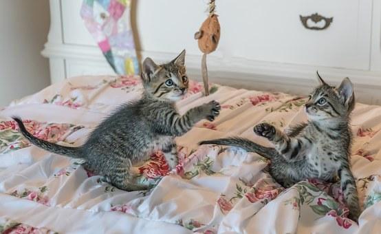 A macskák kedvenc elfoglaltsága a játék