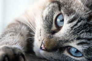 A cicák rengeteg törődést igényelnek.